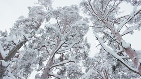 Trees covered with snow stock video footage