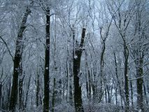 Trees covered with snow. Winter Forest. royalty free stock photography