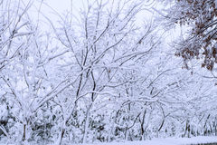 Trees covered by snow in Winter. Trees covered by snow in Winter landscape Royalty Free Stock Image