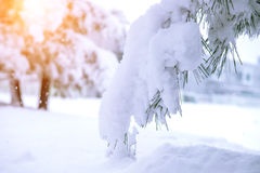 Trees covered by snow in Winter. Trees covered by snow in Winter landscape Stock Image