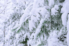 Trees covered by snow in Winter. Trees covered by snow in Winter landscape Royalty Free Stock Images