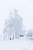 The trees are covered with snow in winter Stock Images