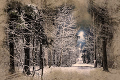 Trees covered with snow in the winter night stock image