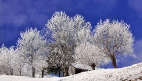 Trees covered by snow in wintry landscape Royalty Free Stock Images