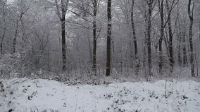 Trees covered with snow. In the woods stock footage