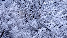 Trees covered with white fluffy snow, beautiful closeup view. Winter fairy landscape stock video footage
