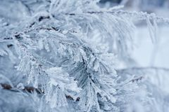 Trees covered with white snow Stock Images
