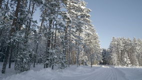 Trees covered with white snow in the forest. The forest filled with white snow during the winter season stock video footage