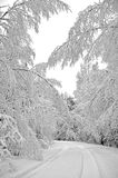 Trees covered with winter snow. A view of a road lined with snow-covered trees after a heavy winter snowstorm Royalty Free Stock Photography