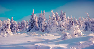 Free Trees Covered With Hoarfrost And Fresh Snow Glowing Bright Sunlight In Mountain Forest Stock Photos - 63410863