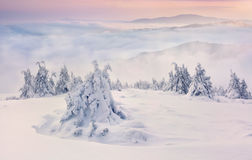 Free Trees Covered With Hoarfrost And Snow In Mountains Stock Image - 33584211