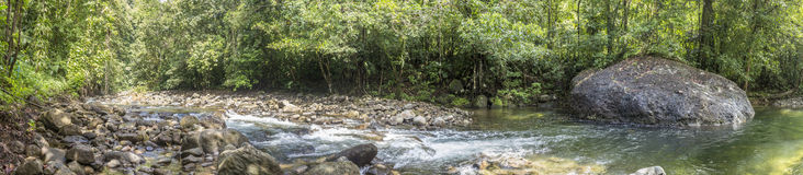 Trees and creek in the wild jungle of Dominica Stock Photo
