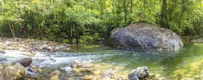 Trees and creek in the wild jungle of Dominica. A natural reserve royalty free stock image