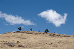 Trees on the Crest of a Dry Hill Stock Images