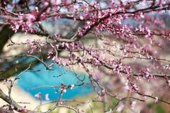 The trees of Crimea Stock Image