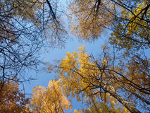 Trees crowns on a sky background. In autumn royalty free stock photos