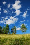 Trees with Cumulus Fractus Stock Photography