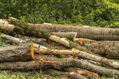 Trees Cut Down into Long Logs In A Pile stock photography
