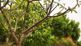 Trees in the cyclonic wind. Tree in the cyclonic wind stock video