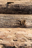Trees damaged by bark beetle Stock Photos