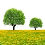Trees on dandelion field Stock Photo