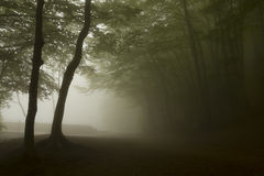 Trees in a dark forest with green fog Royalty Free Stock Photos