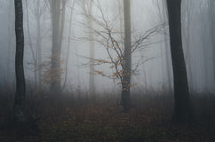 Trees in dark spooky forest with fog on Halloween Stock Photo