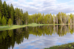 Trees reflected Yellowstone lake Stock Photos