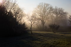 Trees at dawn. Some trees at dawn, with beautiful sunrays cutting throug the mist and projecting shadows Stock Image