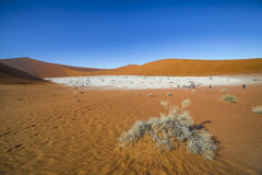 Trees in Deadvlei, or Dead Vlei, in Sossusvlei, in the Namib-Nau Royalty Free Stock Photography