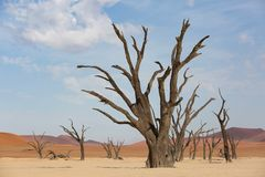 Trees in Death Valley, Namibia in the morning stock images