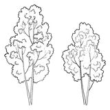 Trees deciduous, outline Royalty Free Stock Photo