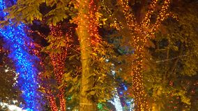 Trees decorated with decorative garlands stock video