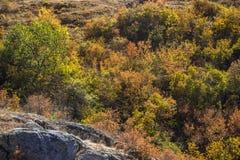 Trees at deep canyon Stock Images