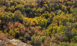 Trees at deep canyon Stock Photos