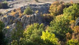 Trees at deep canyon Stock Image