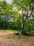 Trees of deep ancient forest. Trees of deep green and ancient forest Stock Photography