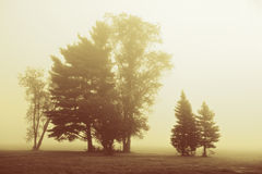 Trees in a dense morning fog. Trees stand in a morning fog, processing sepia Royalty Free Stock Photo