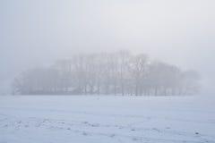 Trees in dense winter fog Royalty Free Stock Photos