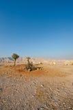 Trees in Desert Royalty Free Stock Photos