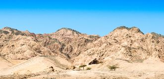 Trees in the desert of egypt against the backdrop of high rocky mountains royalty free stock photography