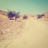 Trees in Desert Stock Images