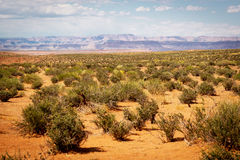 Trees in desert Stock Photos