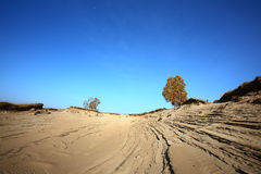 Trees in deserts Royalty Free Stock Image