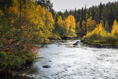 Trees and devios river at conservation area Stock Photo