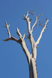Trees die.. Tree Media The indicative mood And feel Related to the life, death, grief, and despair Stock Photos