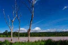 The trees die in water. The trees die in water and bright blue sky stock photography