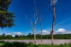 The trees die in water. The trees die in water and bright blue sky royalty free stock photos