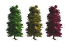 Trees with Different Variations Stock Photography