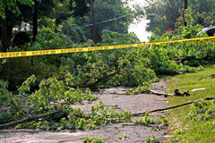 Trees down from wind Royalty Free Stock Photo